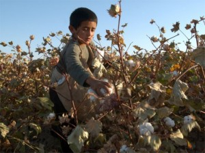 uzbekistan-child-labor-cotton-1-537x402